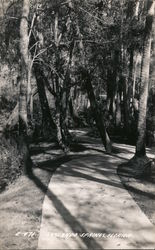 Walkway Through the Trees at Sanlando Springs Postcard