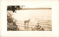 Patsy the Deer, Camp McKinley Resort, Wolf Lake