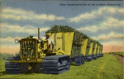 Field Transportation In The Florida Everglades