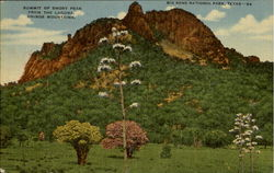 Summit Of Emory Peak Postcard