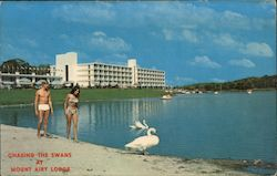 Chasing the Swans at Mount Airy Lodge Postcard