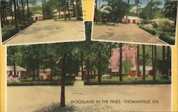 Woodland in the Pines Postcard