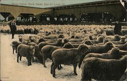 Sheep Scene, Stock Yards Postcard