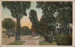 St. Charles Avenue Showing the Garden District