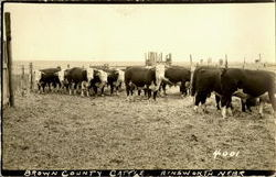 Brown County Cattle