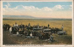 Harrowing and Drilling Wheat on Miller Bros. 101 Ranch Postcard