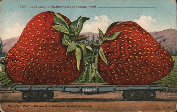 A Carload of Mammoth Strawberries From.... Exaggeration