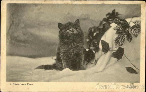 A Christmas Rose Cats