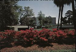 Hyatt, Palmetto Dunes Oceanfront Resort on Hilton Head Island Postcard