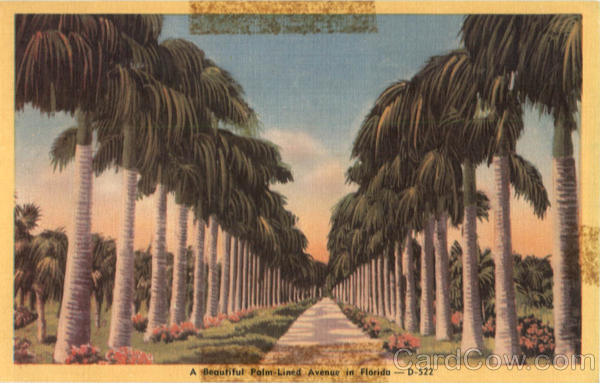 A Beautiful Palm-Lined Avenue in Florida Scenic