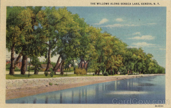 The Willows Along Seneca Lake Geneva New York