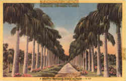 A Beautiful Palm-Lined Avenue in Florida