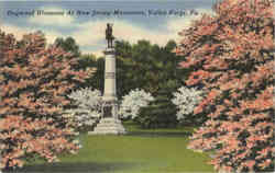 Dogwood Blossoms At New Jersey Monument