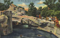 Seals, The Chicago Zoological Park at Brookfield Postcard