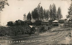 Bungalow Among the Pines Postcard