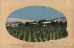 One of the Vineyards