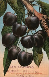 A Cluster of Black Tartarian Cherries - San Leandro Cherry Festival 1910 Postcard