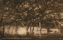 Grape Arbor Estudillo Hotel Postcard