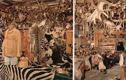 Horns of the Hunter Nordquist's Taxidermy Studio Established 1912 23800 Hesperian Blvd. Postcard