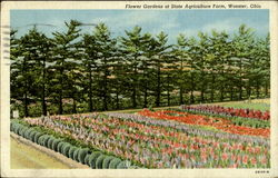 Flower Gardens At State Agriculture Farm