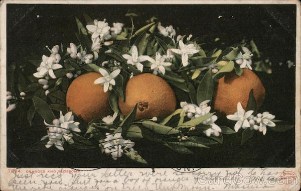 Oranges and Blossoms Florida