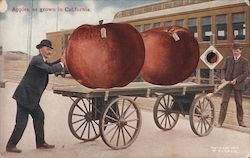 Apples, as grown in California Postcard