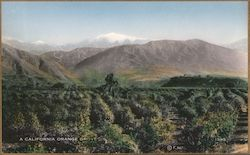 A California Orange Grove