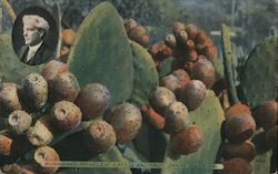 Burbank's Spineless Cactus and Fruit