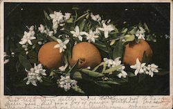 Oranges and Blossoms Postcard