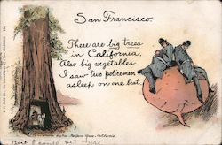 San Francisco - There are Big Trees in California, Also Big Vegetables, I Saw Two Policemen Asleep on One Beet