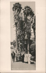 Posing with Palm Trees, Paraiso Hot Springs Postcard
