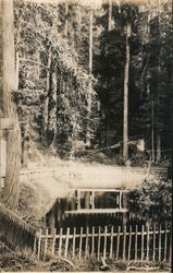 Fenced pond in the Redwood forest Bohemian Grove Postcard