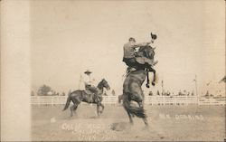Ben Dobbins on Bucking Bronco - California Rodeo 1920 Postcard