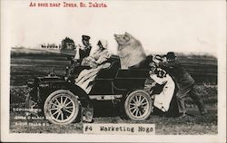 People Pushing a Car with A Man, Woman and Large Pig in the Car