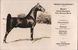 """Nobel Kalarama"" - World's Grand Champion Fine Harness Horse Postcard"