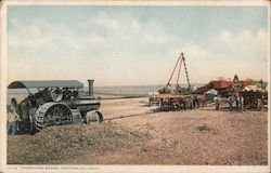 Threshing Beans Postcard