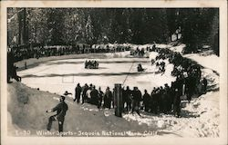 Winter Sports Postcard