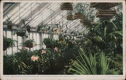 Edith Roosevelt's Orchid Collection, White House Conservatories