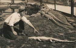 Young Man training alligators sitting in the sun Postcard