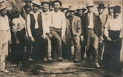 Men standing near large fish that was caught Postcard