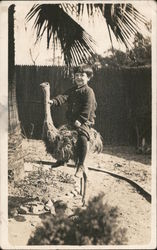 Boy on ostrich Postcard