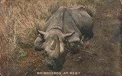 Rhinoveros At Rest