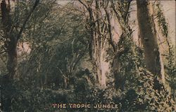 The Tropic Jungle