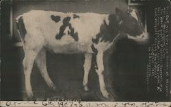 This Calf was born and named at Masonic home