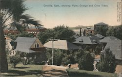 Oroville, Calif., Showing Palm, Orange and Olive Trees. Postcard
