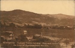 Vineyards-Italian Swiss Colony-Sonoma County, Cal.-On line of Northwestern Pacific Postcard