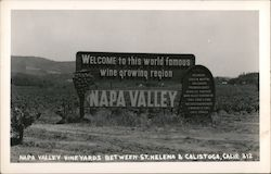 Napa Valley Vineyards Between St. Helena & Calistoga Postcard