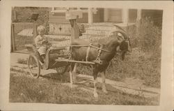 Young Boy in Wicker Goat Cart Postcard