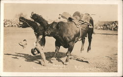Ely Sharkey the Famous Bucking Bull Postcard