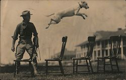 Dog act. Man watches Dog leap 4 wooden chairs.